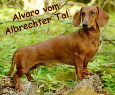 Alvaro-mit-Text
