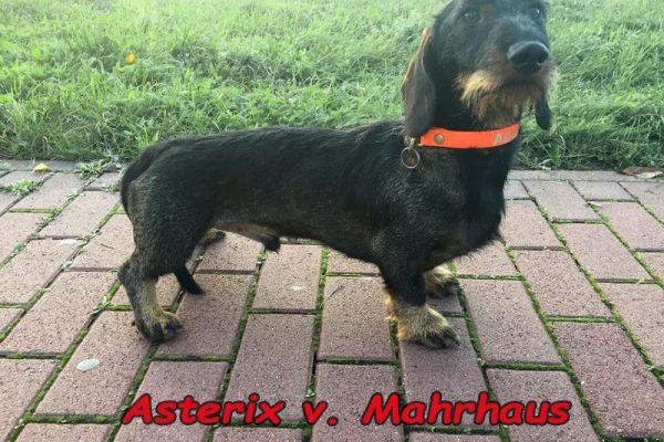Asterix v. Mahrhaus