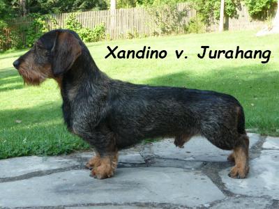Xandino