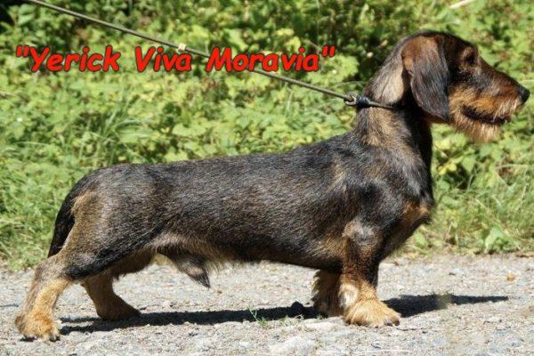 Yerick_Viva_Morawia_Stand_Foto